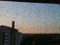 Ramt af fluer?