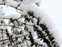 Surt snevejr, foto: ABW