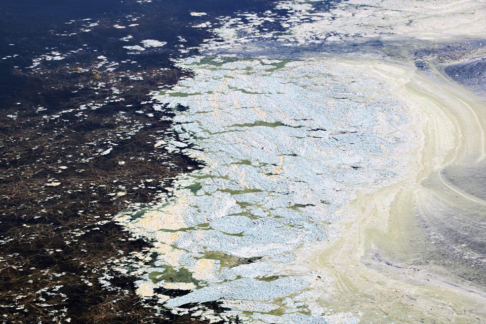 BADNING FRARÅDES ved FREDERIKSDAL FRIBAD på grund af alger