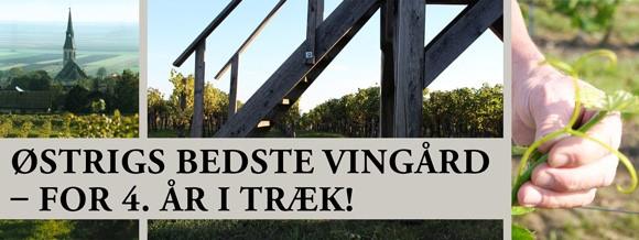 Østrigs bedste vingård – for 4. år i træk!
