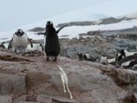 Pingviner & lattergas, Foto: Sophie Elise Elberling
