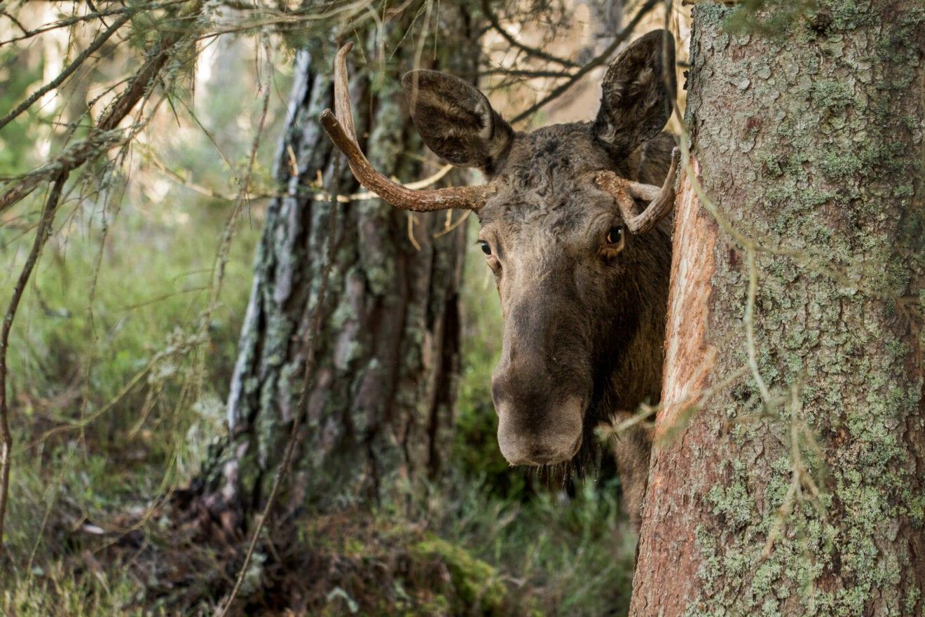 Det kan være billigst at lade naturen passe sig selv - men EU-støtte er en kæp i hjulet